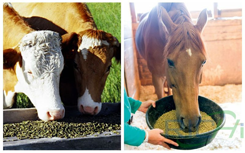 Lucerne Alfalfa Pellets Are High-quality Feed for Cattle and Horses