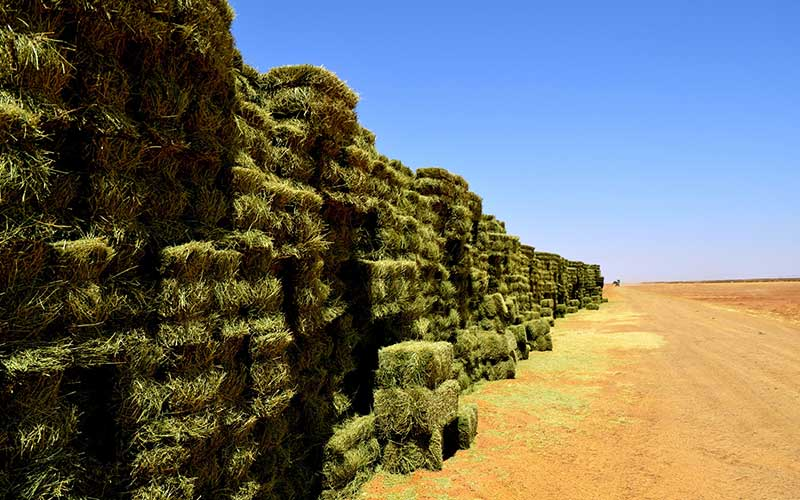 Demand for Alfalfa in the Global Animal Feed Pellet Market