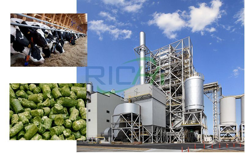 Cattle Feed Pellet Mill Production Line