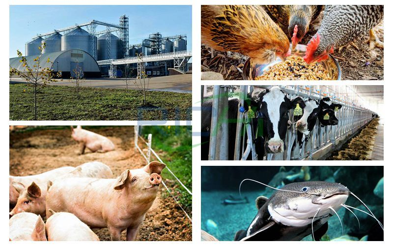 Production and Processing Project of 300,000 Tons of Powdered Cattle Sheep Pigs Chickens and Fish Feed