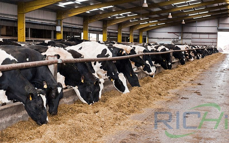 Factors Affecting the Stability of Feed Vitamins in Cattle Feed Mills