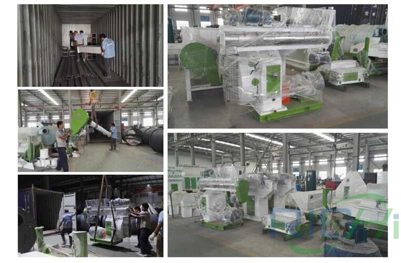 10T/H animal feed pelletizer production line delivery site