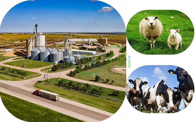 How Much Does It Cost to Invest in a Pellet Processing Plant With an Annual Output of 100,000 Tons of Cattle and Sheep?