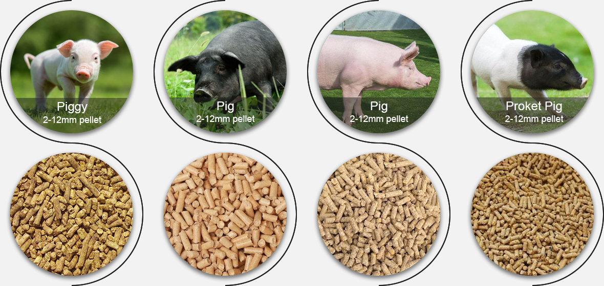 Pig Feed Pellet Production Line