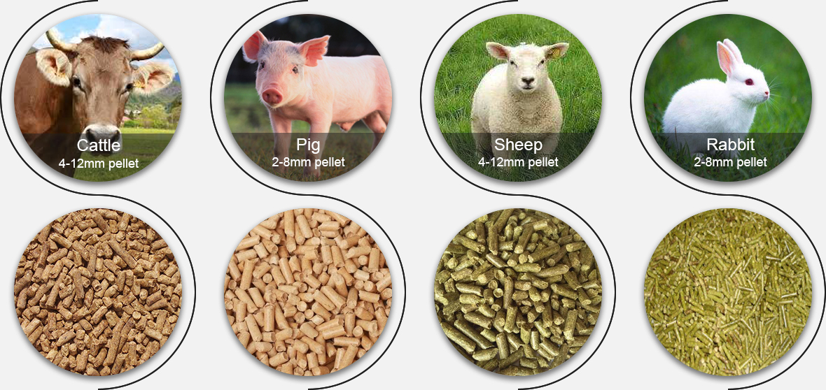 Pigs, cattle, sheep and feed pellets