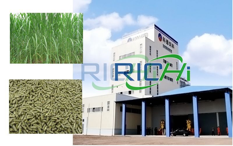 Analysis of Pennisetum Hydridum Pellet Production Project