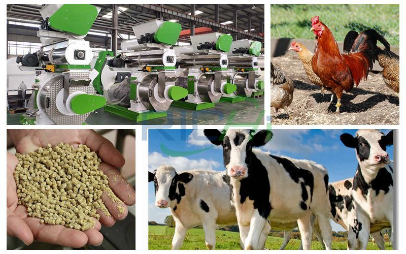What is the price of the cattle and chicken feed machinery production line?
