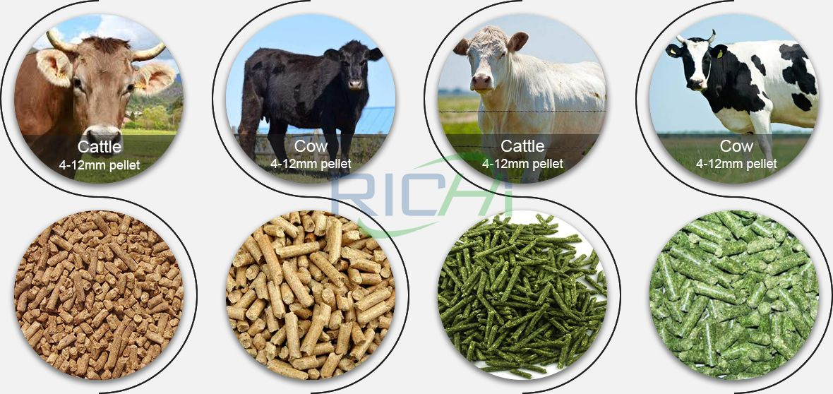 Cattle Fattening Feed Formula Recommendation